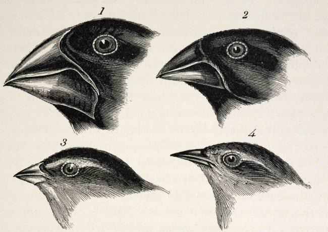 charles Darwin - De l'origine d'une théorie