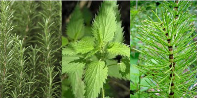 plantes-médicinales