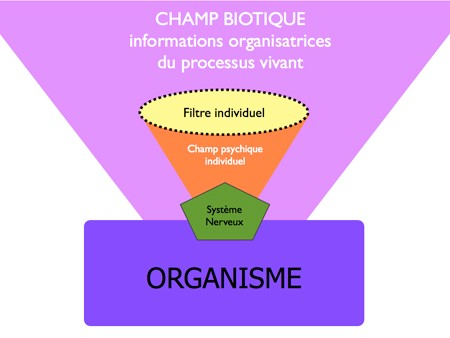 Champ biotique