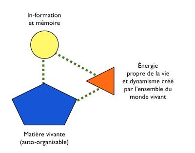 In-formation et mémoire